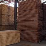 Beech wood 8