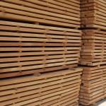 Beech wood 7
