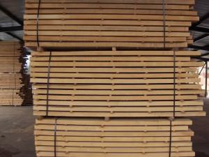 Beech wood 9