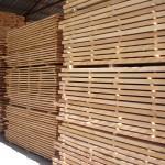 Beech wood 10