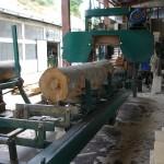 Frais en bois de hêtre coupé